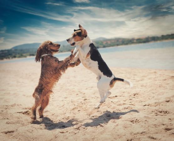 Mascotas Hotel Pet Friendly Hotel B Nayar Riviera Nayarit Resort Todo Incluido